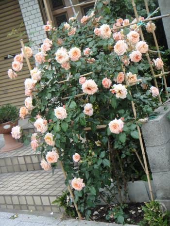 007_convert_20110524221745.jpg