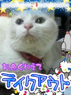 20081203161940_g1qF8fpkMzkiYZl.jpg
