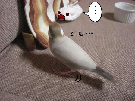 文鳥 013