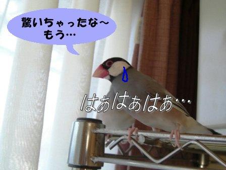 ちび・ぶん3