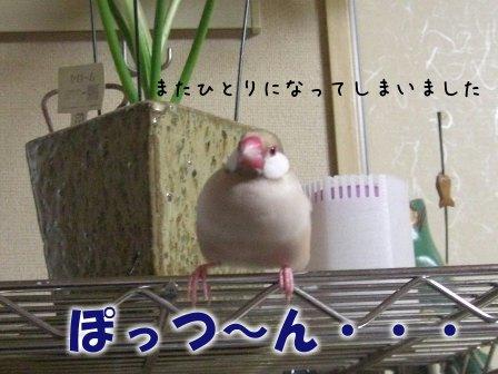 文鳥 014