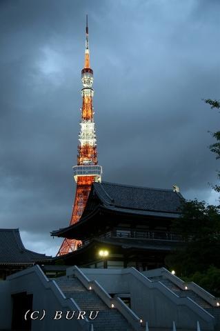 東京タワー (30)