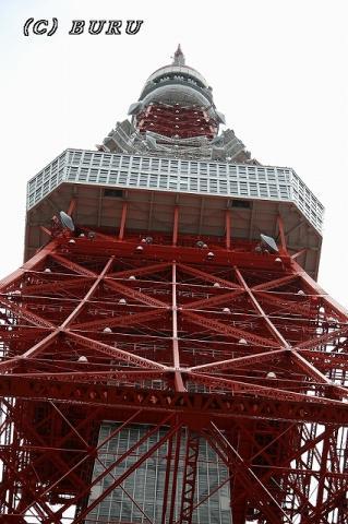 東京タワー (5)