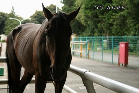 馬 (3)1