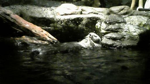 夜の海遊館 眠るラッコ