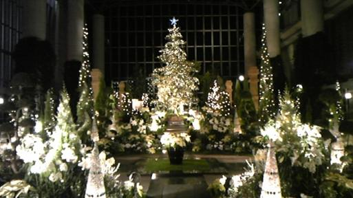 クリスマスライトアップ2008 @奇跡の星の植物園クリスマスフラワーショー