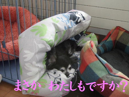 2009_01070007.jpg