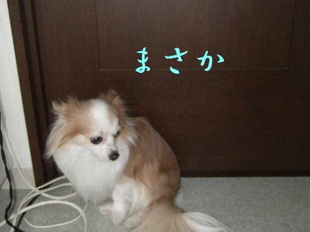 2009_01070016.jpg