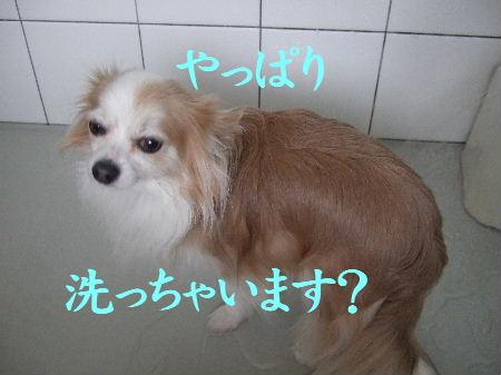 2009_01070018.jpg