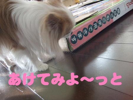2009_01190003.jpg
