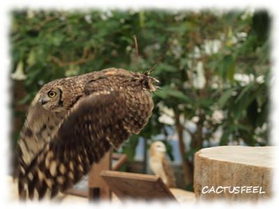 神戸花鳥園0922-3