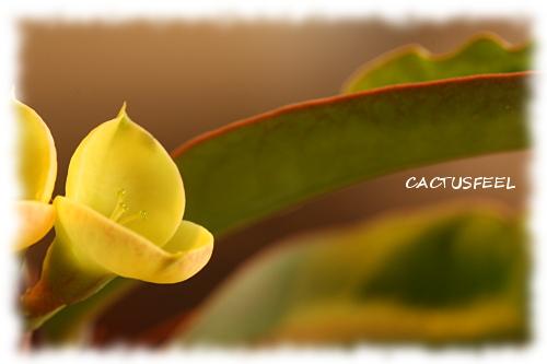 花キリン1115-2