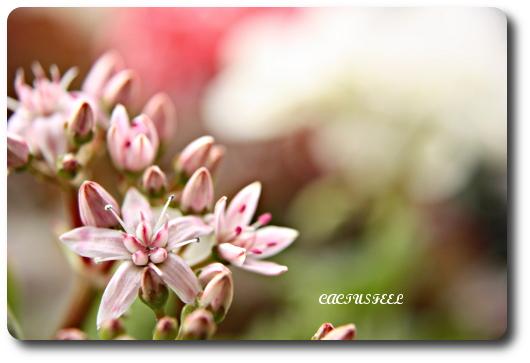 桜花月0101-4