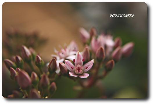 桜花月0101-2