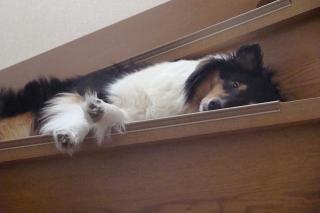 セーラ。、眠いの?