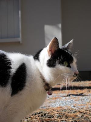 IMG_0068_convert_猫