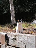 IMG_0067_convert_猫1