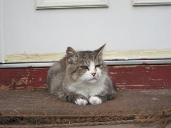 バウアーズ猫