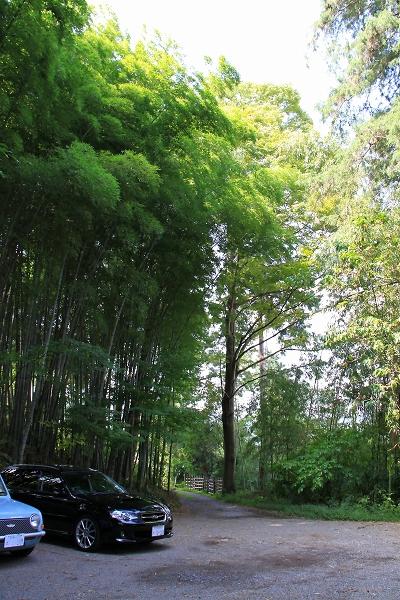 竹林カフェ005