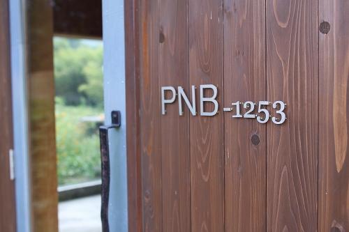PNB1253009.jpg
