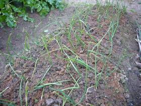 冬の収穫06