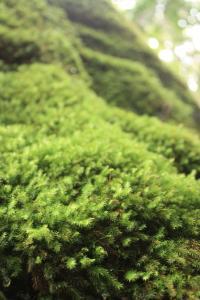 縄文杉12