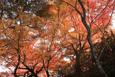 東福寺09