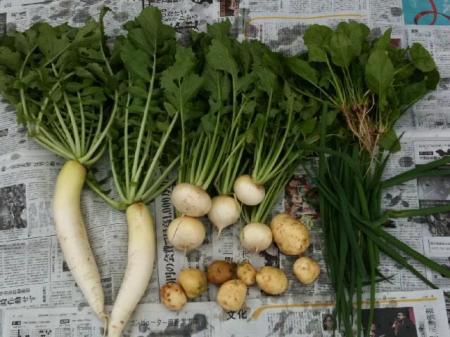 冬野菜0912