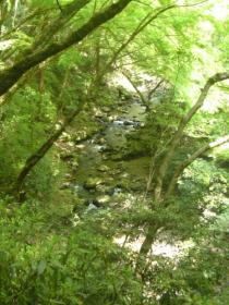 箕面の滝08