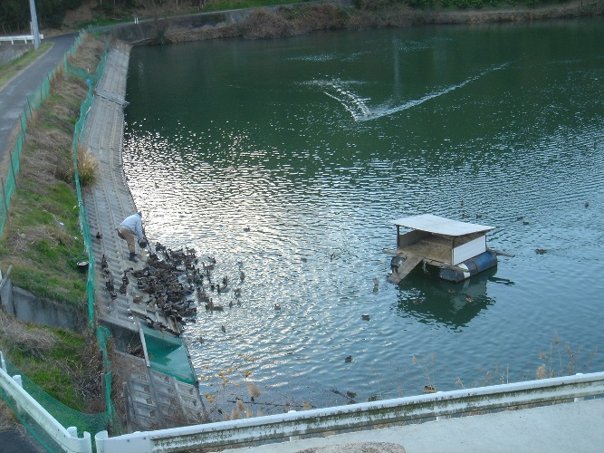 新年 鴨池
