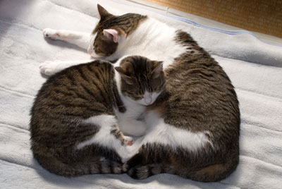 cats1.jpg