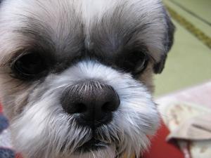 010_convert_20090110222408.jpg