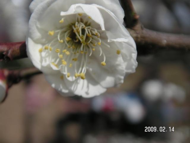 梅とバーベキュー 009