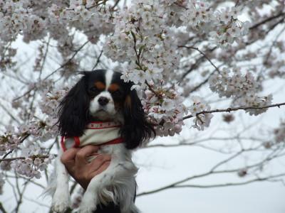 桜と一緒に・・・