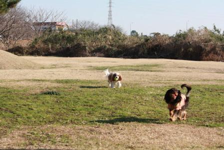 ライフちゃんとモニカちゃん、ボール遊びが大好き♪♪