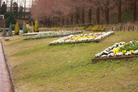 ひし形花壇のお花が綺麗