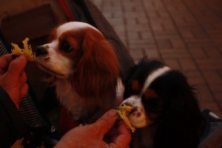 焼き芋を見つめるチャコ&エリー