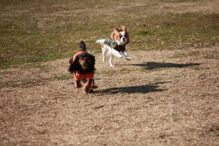 モニカちゃん、ラムちゃんと走る