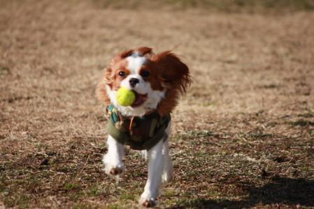 ラムちゃん、ボール遊び楽しそう♪♪