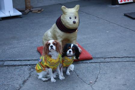 十一丁目茶屋の看板犬?