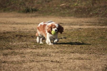 ボール遊びしているライフちゃん