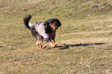 モニカちゃん、ボール遊びが好きなんですよ