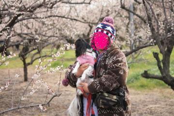梅の花とエリー、匂いを嗅いでるエリーも女の子