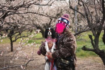 梅の花とエリー