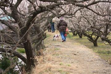 歩いているママとチャコ&エリー