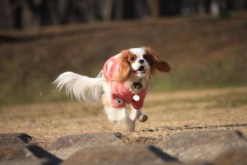 リッツちゃん、楽しそうに走る