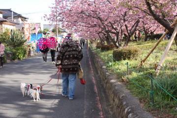 桜が満開綺麗だねぇ~