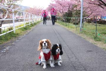 桜をバックに撮りました