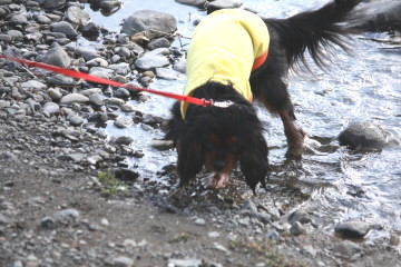 奈々ちゃん、川遊び楽しそう♪♪