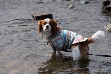 クック君、水遊び楽しそう♪♪